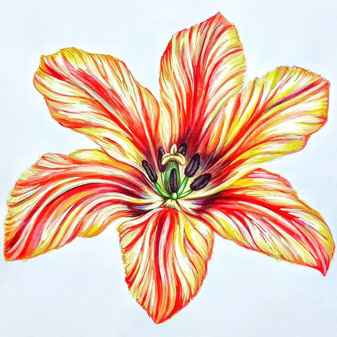 Skizze_scetch_drawing_Zeichnung_flowers_Blumen_Seidenmann_Zurich